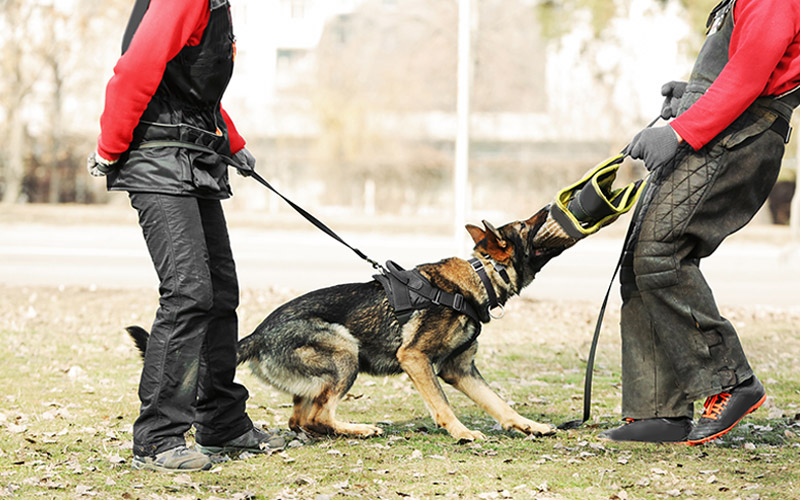 Barking up the wrong tree: Florida drug-sniffing dogs given free rein
